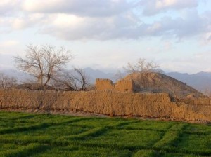 کشتزارها و تپه های باستانی روستای تربقان کاشمر